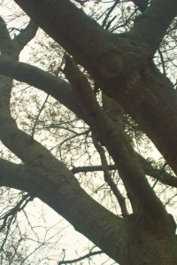 If you look close, you can see the head of the woodpecker looking out. I don't have a fancy long-range lens.